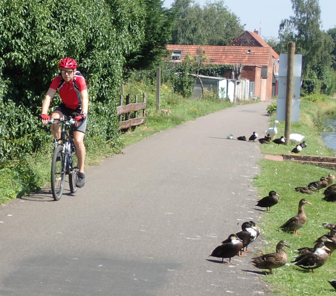 Syklist og ender