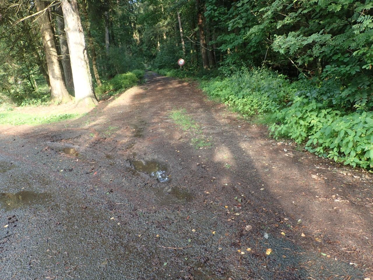 Skogsvei mot Hamburg